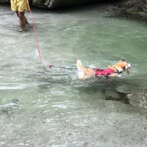 【山梨】精進ヶ滝で水遊び