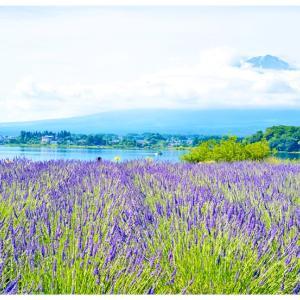 大石公園のラベンダー@河口湖