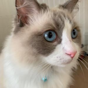 【迷い猫保護して4か月】熊吉さん