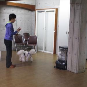 今日のしつけ教室★わかば動物病院★西東京教会
