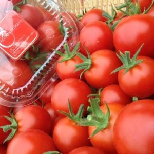 あっちゃんハウス  〜トマト販売開始〜