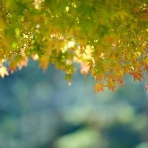 昭和記念公園へ。