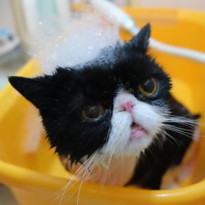 はっちゃんを洗いました。