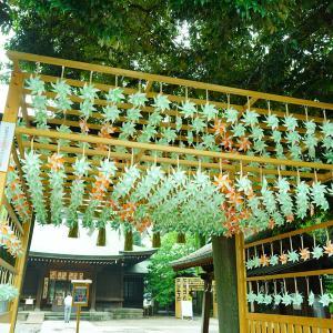 川越氷川神社へ。