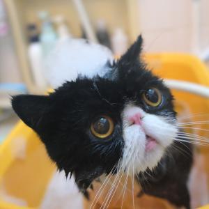 朝から洗いました。