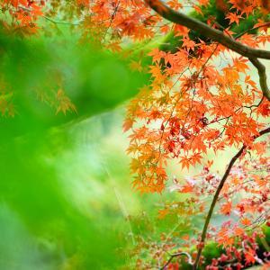 写真教室@新宿御苑。
