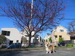 3月前半の近所散歩