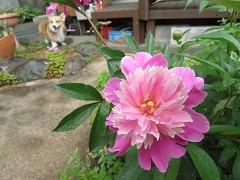 4月5月の庭