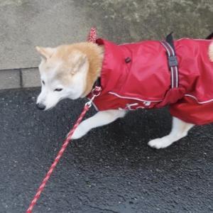 雨散歩と風ビュービュー