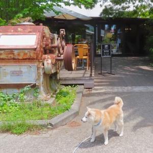 犬友とおされレストランでランチ