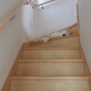 階段寝の季節がやってきた