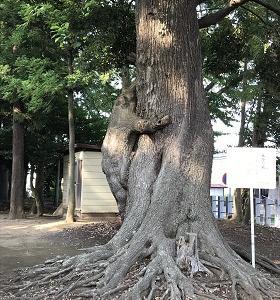 木登り熊~♪