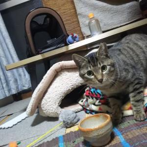 【猫】保護猫生活4か月目突入