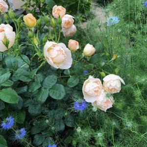 庭作業とワンコ
