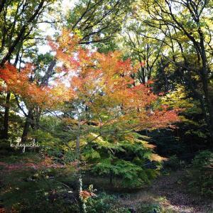 ムーミンバレーパークの紅葉