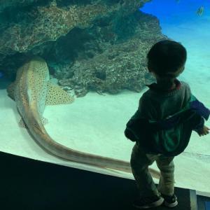 年パスの池袋サンシャイン水族館へ