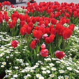 松阪ベルファーム「春の花」見に行ってきました~(^^)