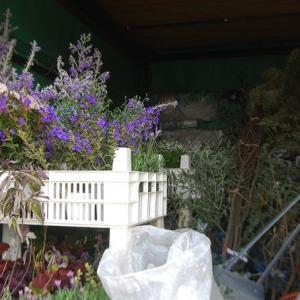 外構の庭仕事を施工しました。