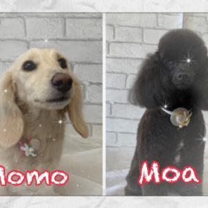 Moora Moora