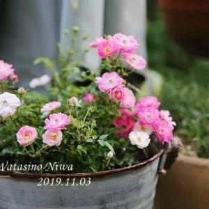 冬も花を楽しむ為の鉢作り