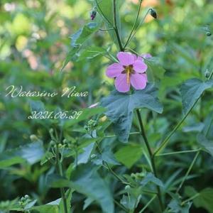 夏の花と山登り