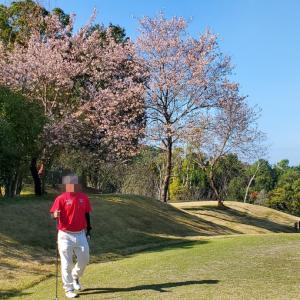 桜咲く11月?