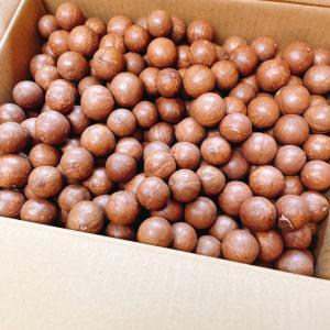 生の殻付きマカダミアナッツ