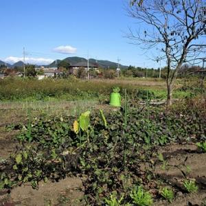 希望ヶ丘菜園 #39