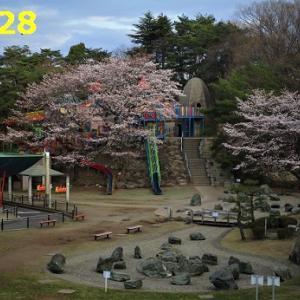 2020・03・28 八幡山公園