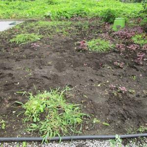 希望ヶ丘菜園 #44