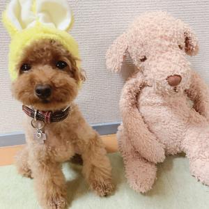 ウサ子&鶴見緑地の続き!