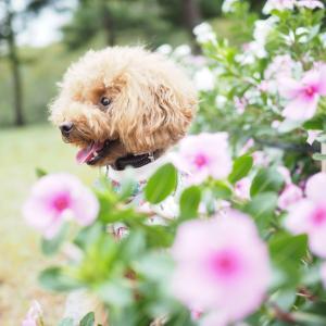鶴見緑地のお花とサラさん!