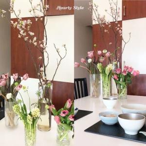 香港の自宅でお花見♪