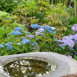 紫陽花の季節〜長谷寺より