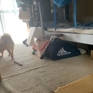 片づけが進んで家の傷みも気になってきたら…畳をさくっと簡単にイメチェン!