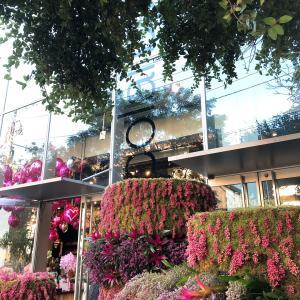【食】お花とスイーツ ニコライバーグマンカフェ