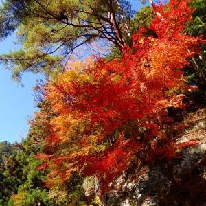 焼山寺山 紅葉真っ盛り 2019年11月16日