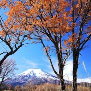 北富士演習場の紅葉~