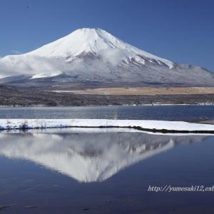 新雪の山中湖 1