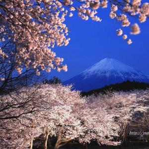 夜桜プレミアムライトアップ