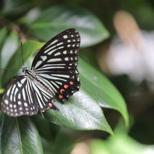 9月の庭で蝶と遊ぶ~