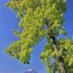 萌え萌えの樹