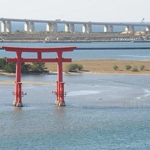 おはよう!南浜名湖 11月17日 舞阪漁港全漁休漁、浜名湖はヒラメの季節