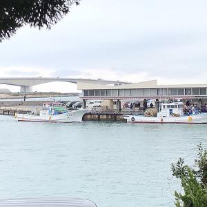 舞阪・新居しらす漁5日目の海へ!「舞阪しらす親分一家」で知る豊漁