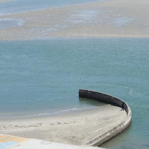 こんにちは!南浜名湖 6月24日 シラス大豊漁・舞阪かつを揚がる梅雨晴れ間