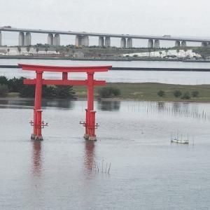 おはよう!南浜名湖 舞阪トラフグ漁解禁日