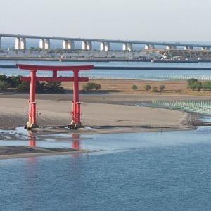 おはよう!南浜名湖 11月25日 舞阪トラフグ漁・タイ網・底曳き、秋冬漁フル出漁の海