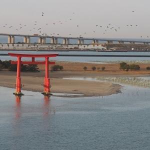 おはよう!南浜名湖 1月22日 舞阪からアカムツ・1月のかつを漁出漁