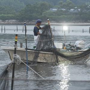 浜名湖伝統漁角立て網を訪ねる 村櫛漁師高山成顕さん