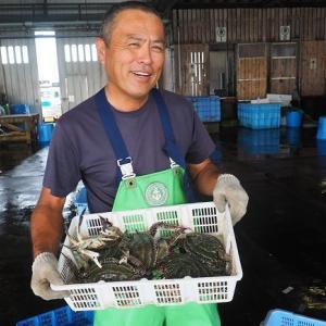 舞阪漁港俊栄丸 刺し網漁の俊さんの大きなガザミ(ササガニ)